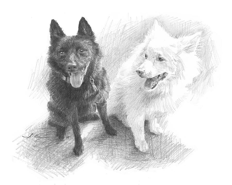 Black Dog White Dog Drawing Drawing by Mike Theuer