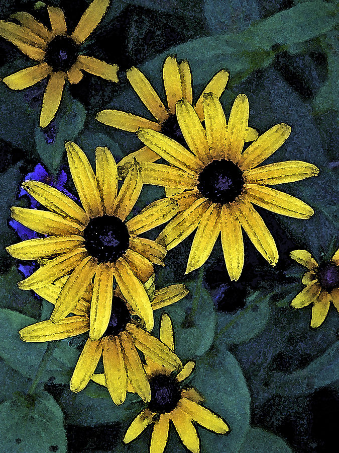 Black-eyed Susans Digital Art - Black-eyed Susans by Debra Wilkinson