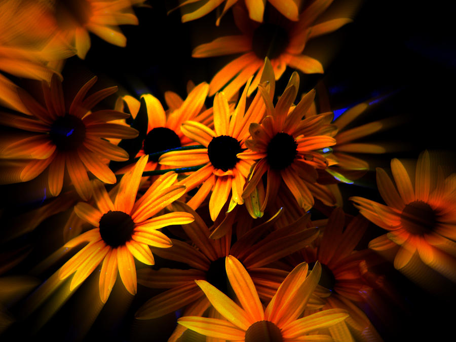 Flowers Photograph - Black Eyed Susans by Martin Morehead