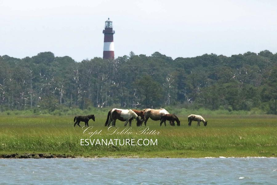Wild Horses Photograph - Black Foal by the Lighthouse by Captain Debbie Ritter