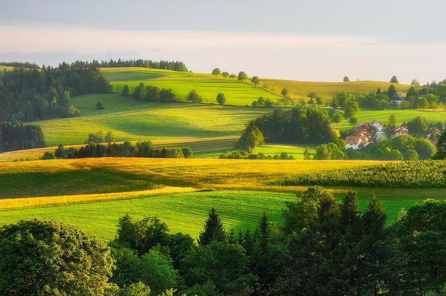 Black Forest Landscape Photograph