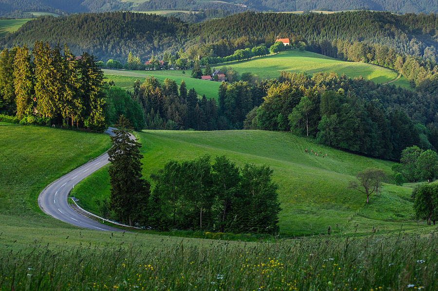 Black Forest Morning Photograph