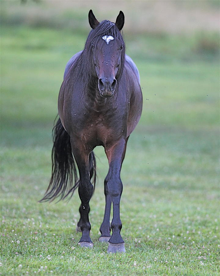 Horse Photograph - Black Horse by Glenn Vidal