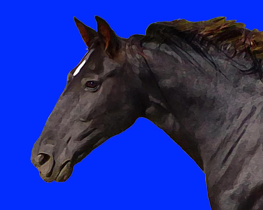 Black Horse Spirit Blue by Jana Russon