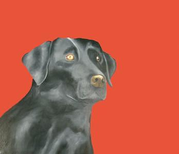 Black Labrador Painting - Black Labrador by Dick Larsen