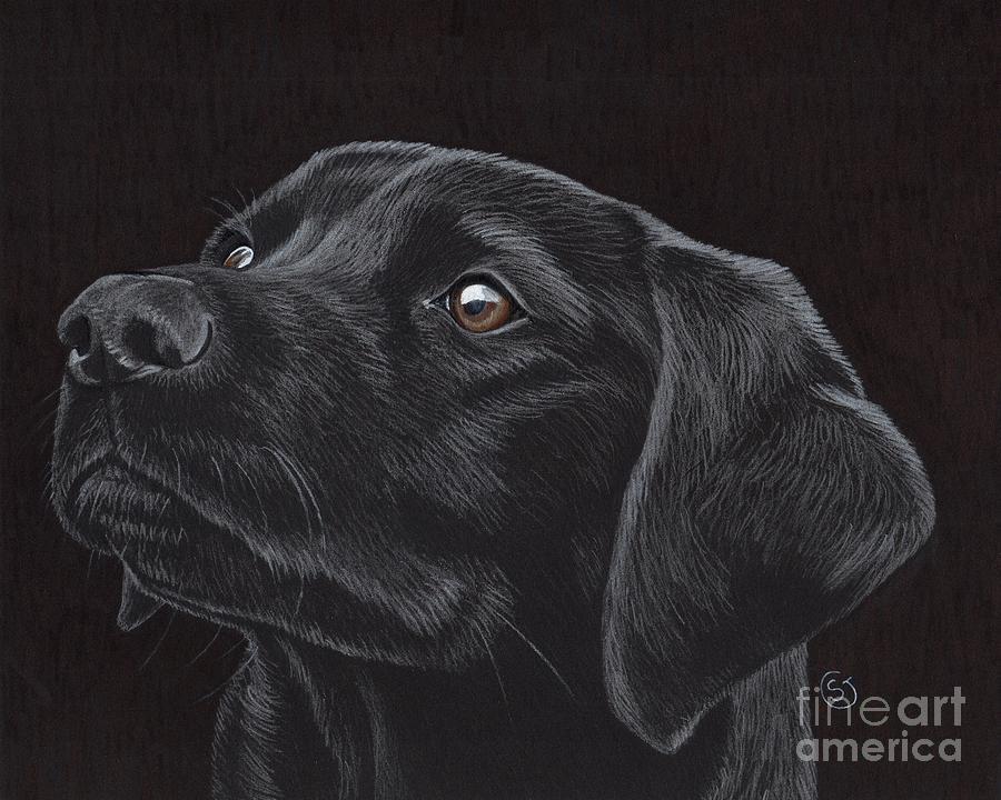Dog Drawing - Black Labrador Retriever - Loyal Companion by Sherry Goeben