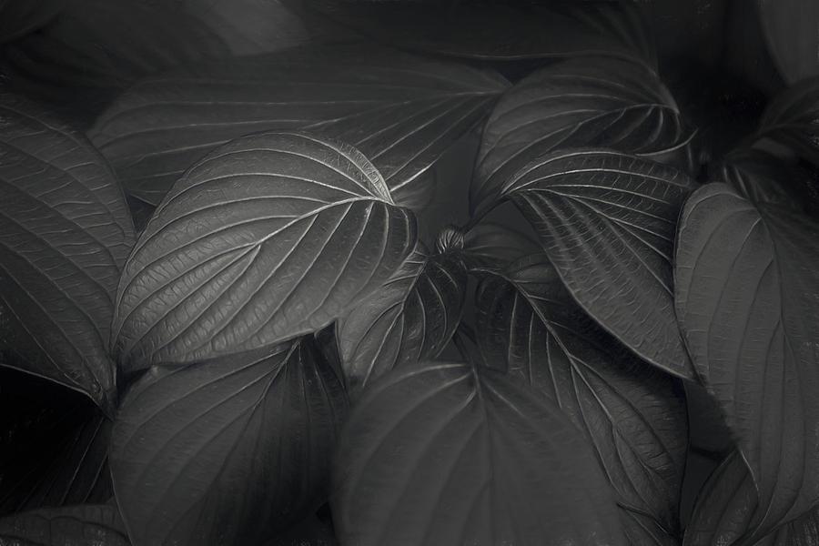 Black Leaves Photograph
