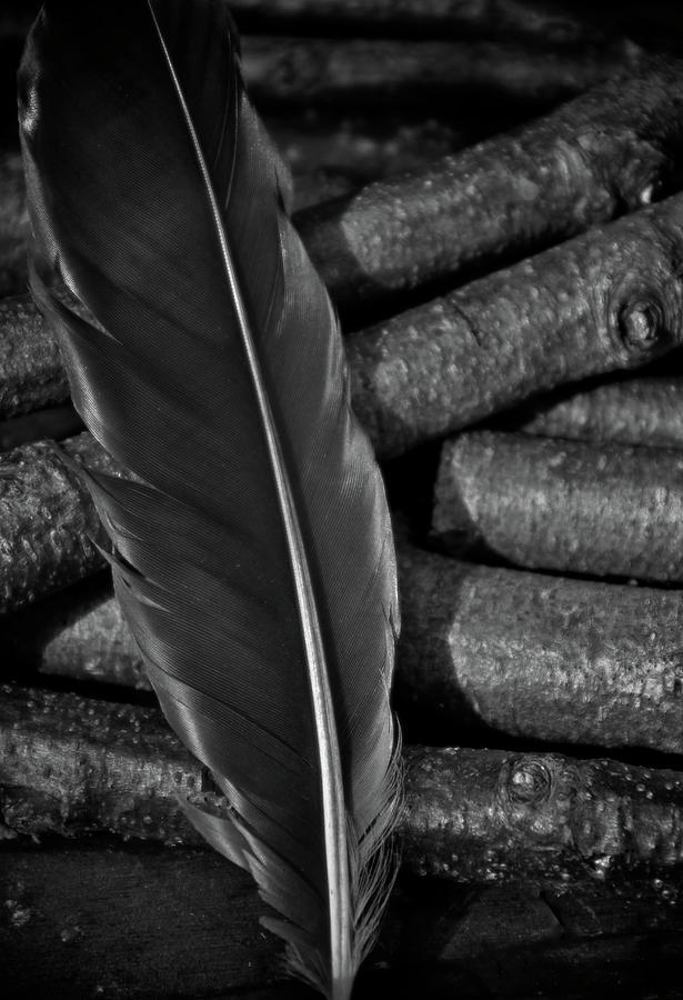 Black Feather Photograph - Black by Odd Jeppesen