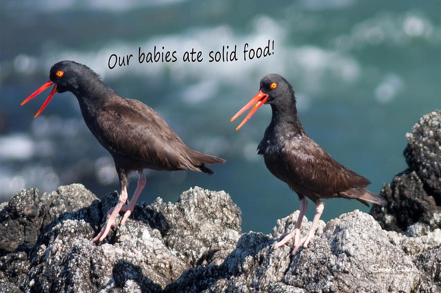 Black Oyster Catcher says Our Babies ate Solid Food Photograph by Sherry Clark