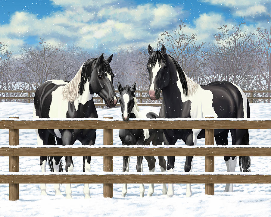 Horses Painting - Black Paint Horses In Snow by Crista Forest