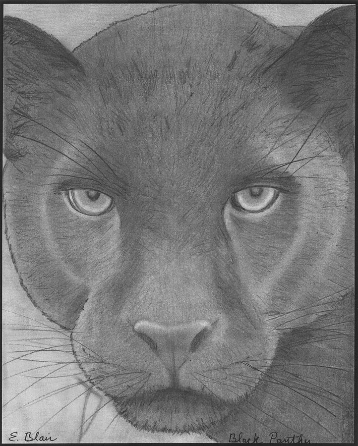Wildlife Drawing - black Panther by Eileen Blair