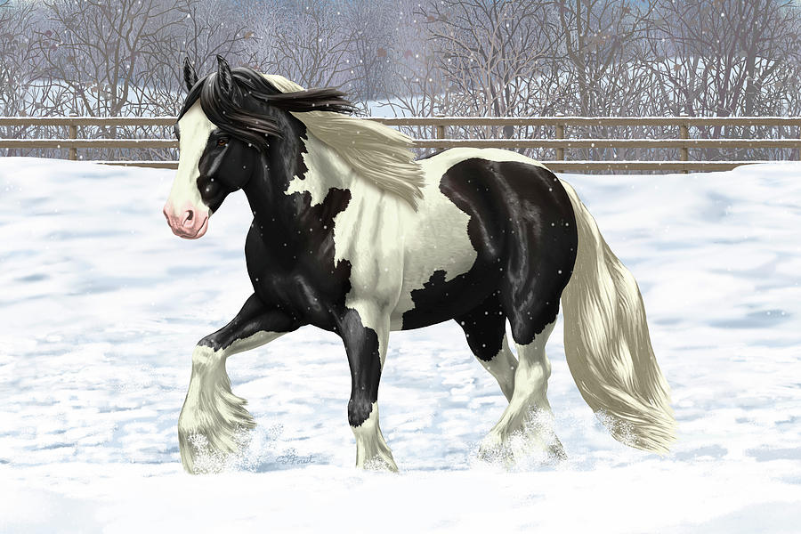 Horses Painting - Black Pinto Gypsy Vanner In Snow by Crista Forest