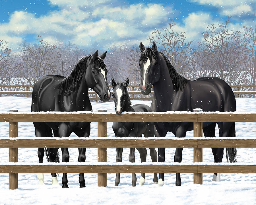 Horses Painting - Black Quarter Horses In Snow by Crista Forest