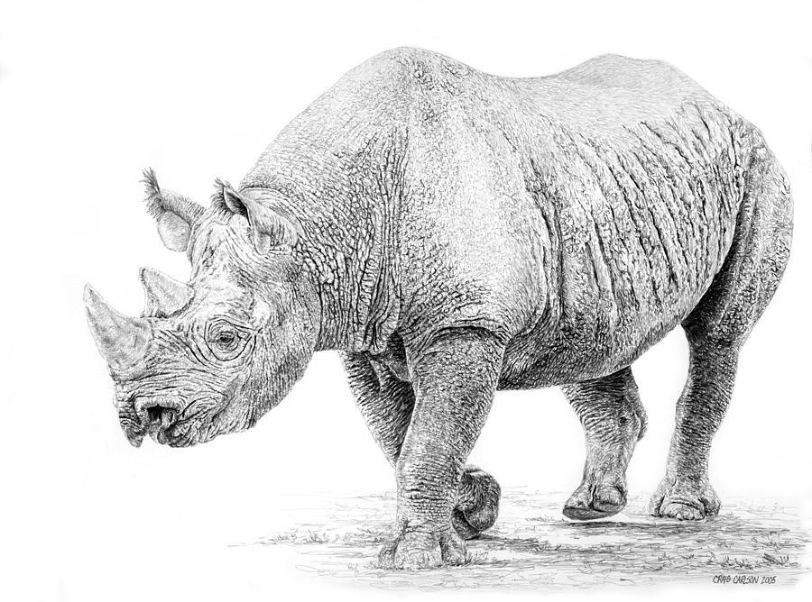 Line Drawing Rhino : Black rhino drawing by craig carlson