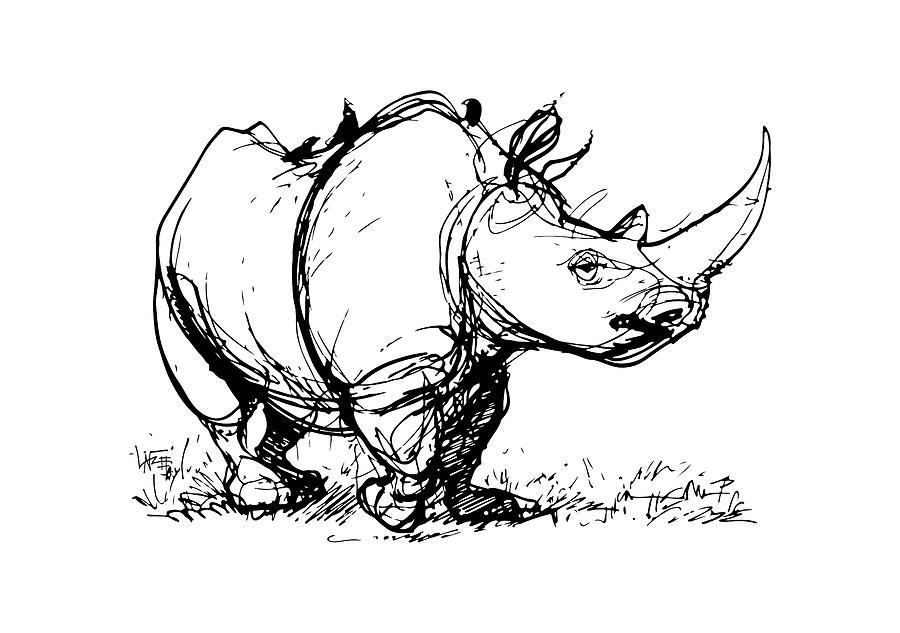 Line Drawing Rhinoceros : Black rhino gesture sketch drawing by john lafree