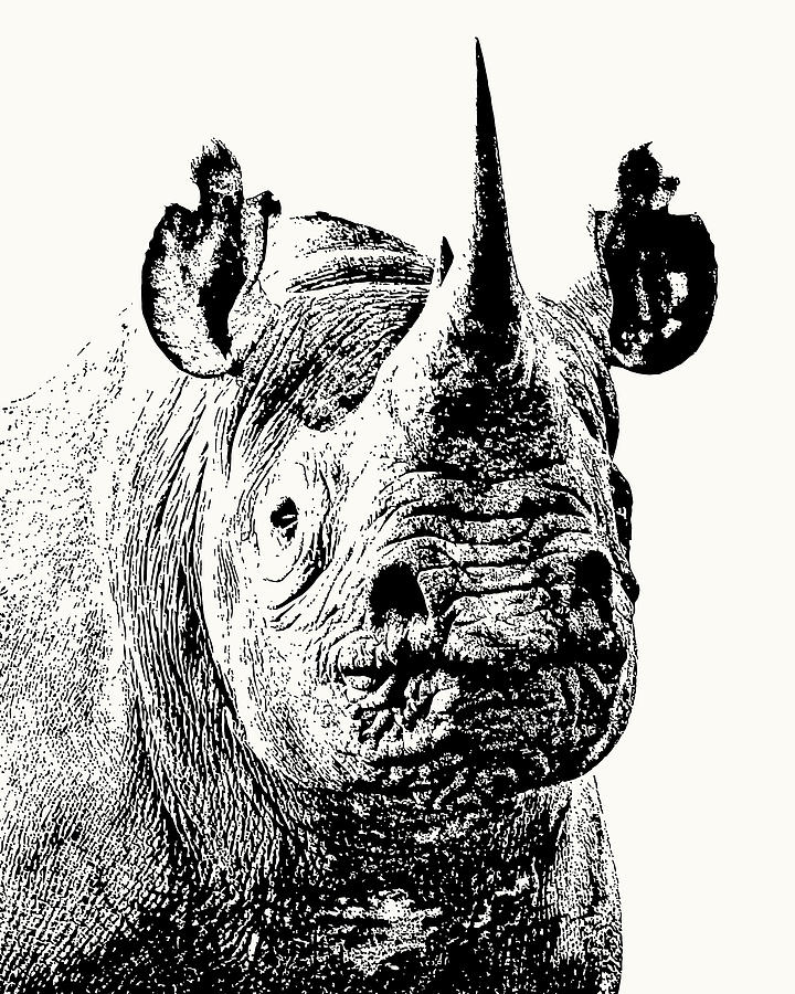 Black Rhino Portrait by Scotch Macaskill