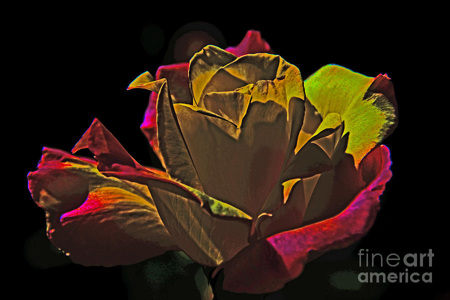 Flower Photograph - Black Rose by David Frederick