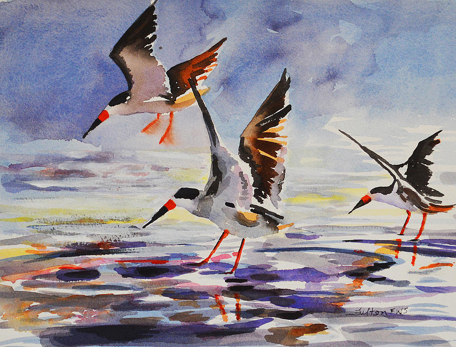 Black Skimmers 2-18-16 by Julianne Felton