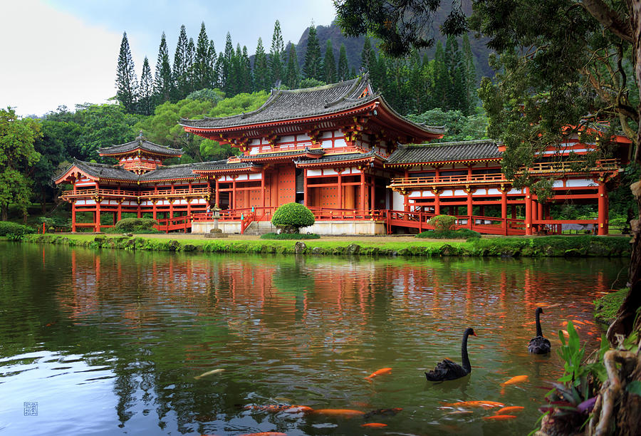 Black Swans at Byodo-In by Geoffrey Lewis