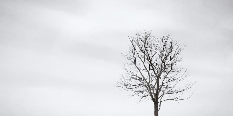 Black Tree White Sky Photograph