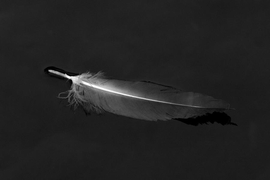 Black Vulture's Feather Floating on Water by John Harmon