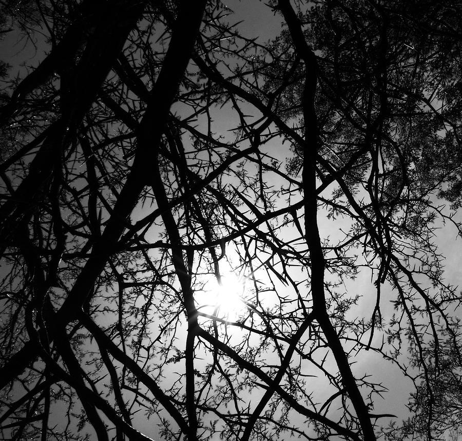 Black Walnut Tree Photograph - Black Walnut Spikes by Anna Villarreal Garbis