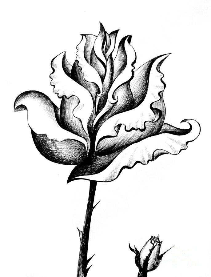 Black White Rose Pencil Art Drawing By Sofia Metal Queen