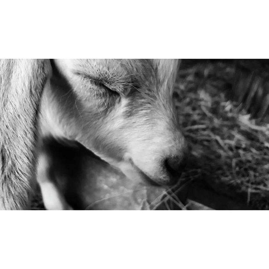 Cute Photograph - #blackandwhite #bnw #bnw_captures by Natalie Anne