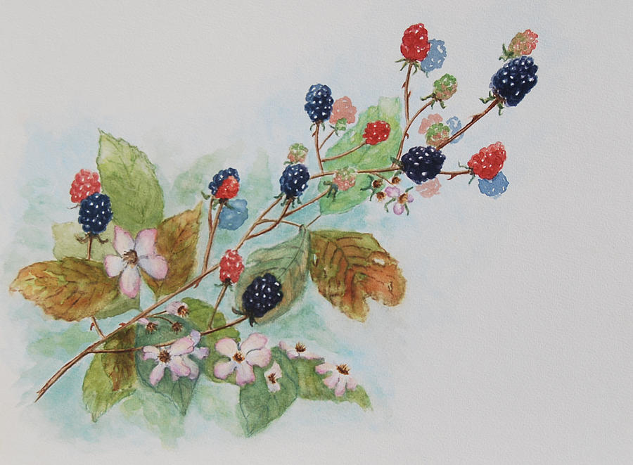 Blackberries Painting - Blackberry Composition by Geraldine Leahy