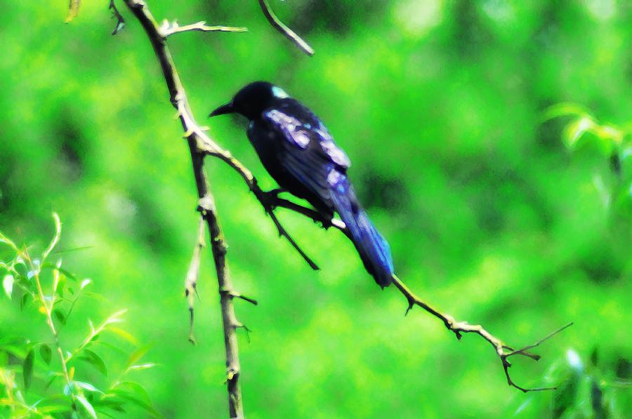 Bird Photograph - Blackbird by Bill Cannon
