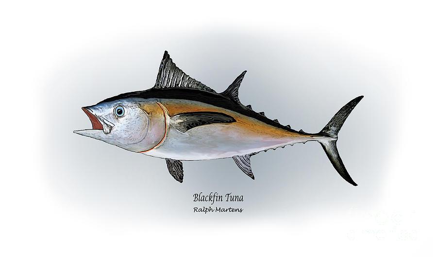 Blackfin Tuna Painting - Blackfin Tuna by Ralph Martens
