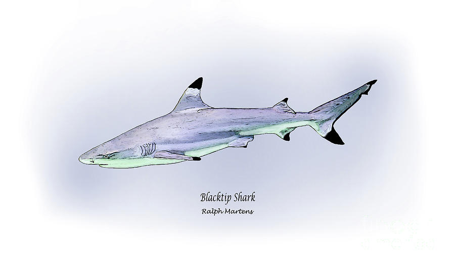 Blacktip Shark Painting - Blacktip Shark by Ralph Martens