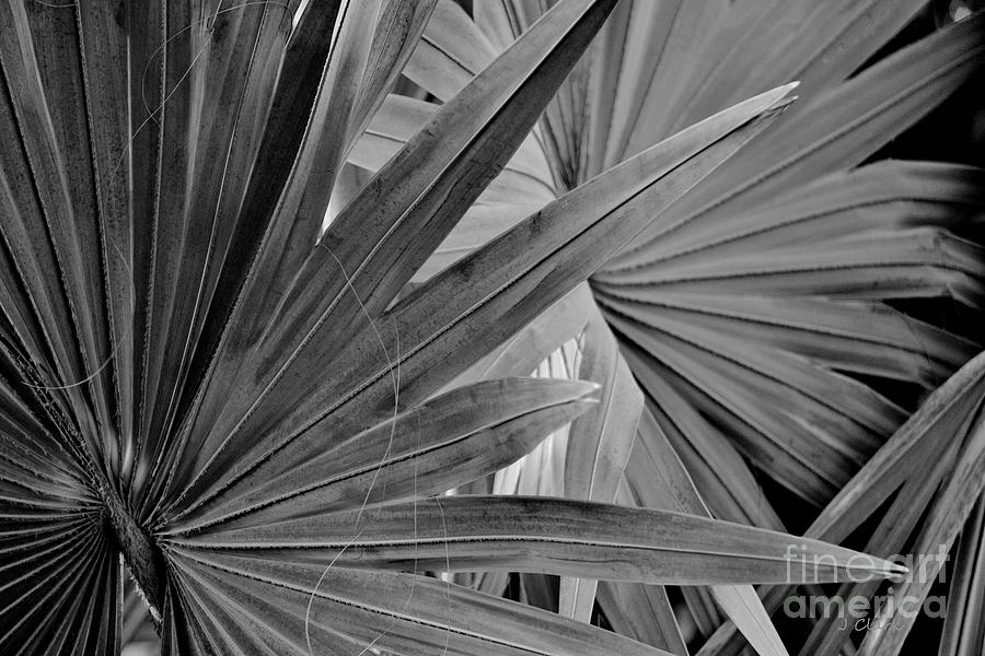 Photograph Photograph - Blades by John Clark