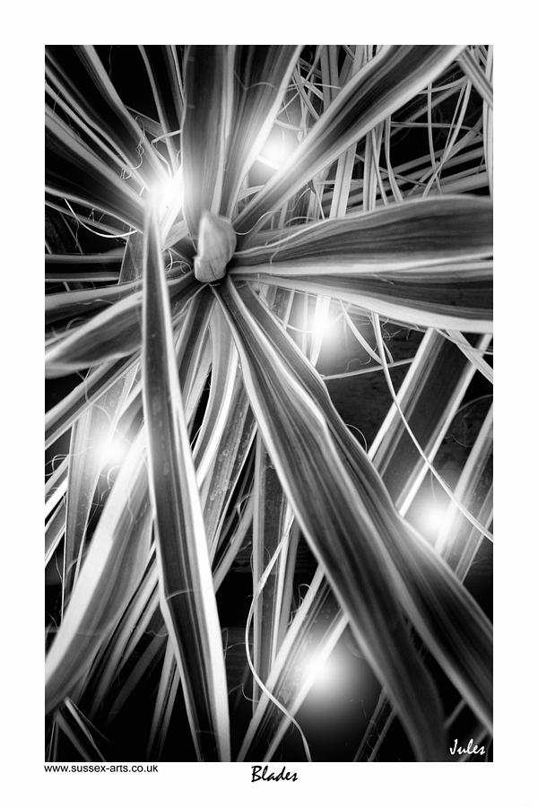 Black And White Photograph - Blades by Jules - Sussex-Arts