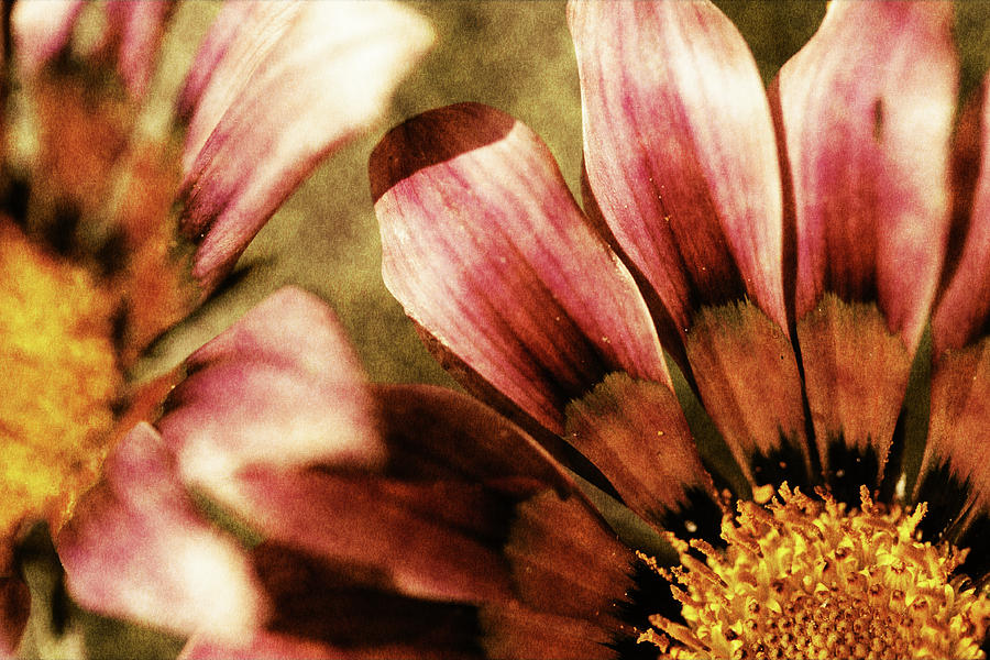 Blanket Flowers Photograph - Blanket Flowers by Bonnie Bruno