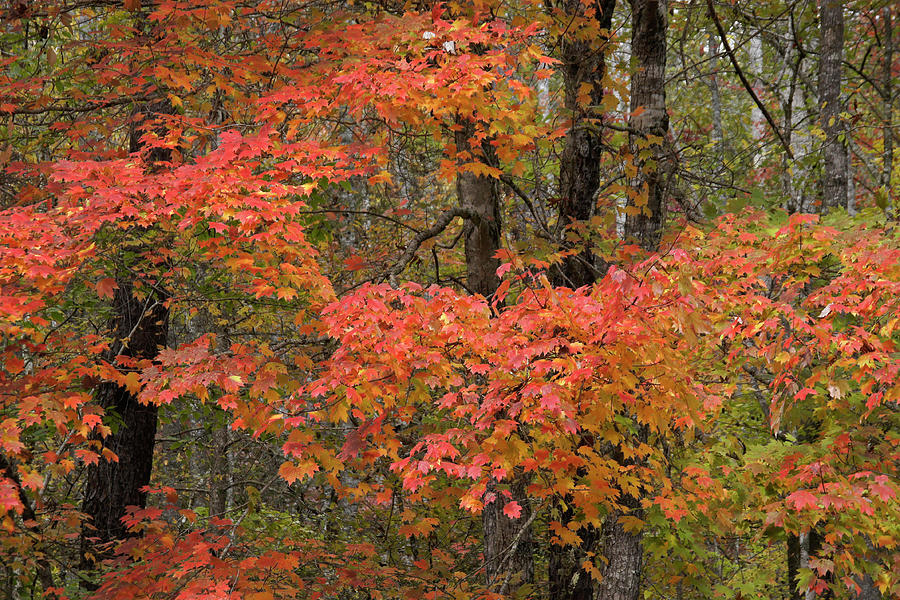 Blaze of Autumn by Michele Burgess