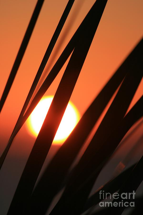 Sun Photograph - Blazing Sunset And Grasses by Nadine Rippelmeyer