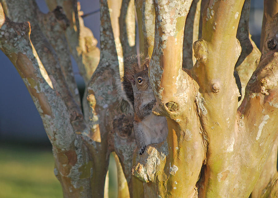 Squirrel Photograph - Blending In by Adele Moscaritolo