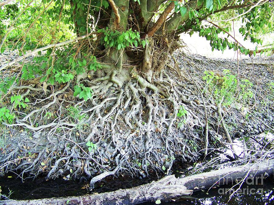 Blessing Root Stones by Julie Rauscher