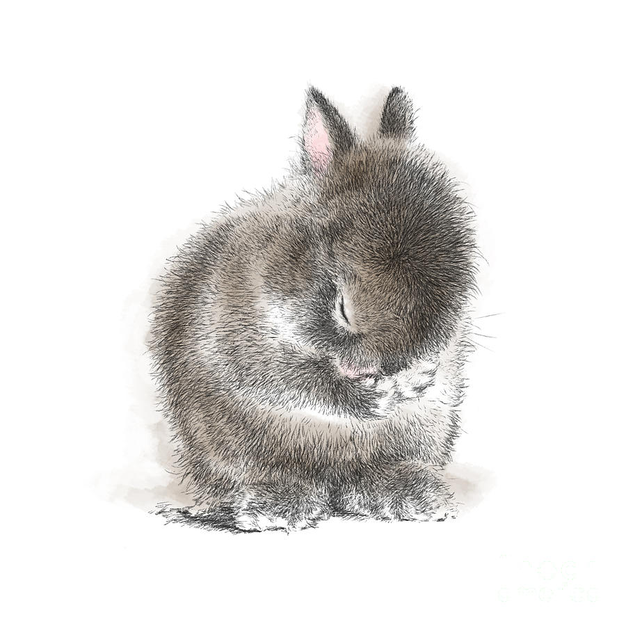 Bunny Drawing - Bling2 by Laurie Musser