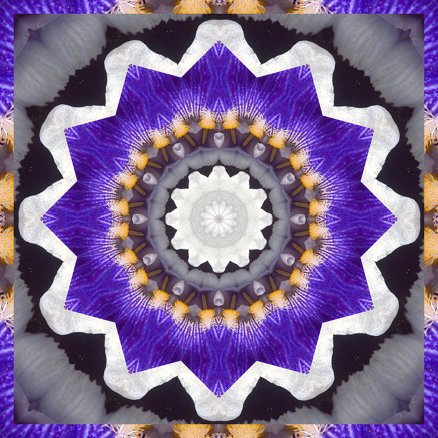 Mandalas Photograph - Bliss by Bell And Todd