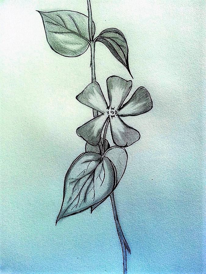 Flower Drawing - Bliss by Deepa Sahoo