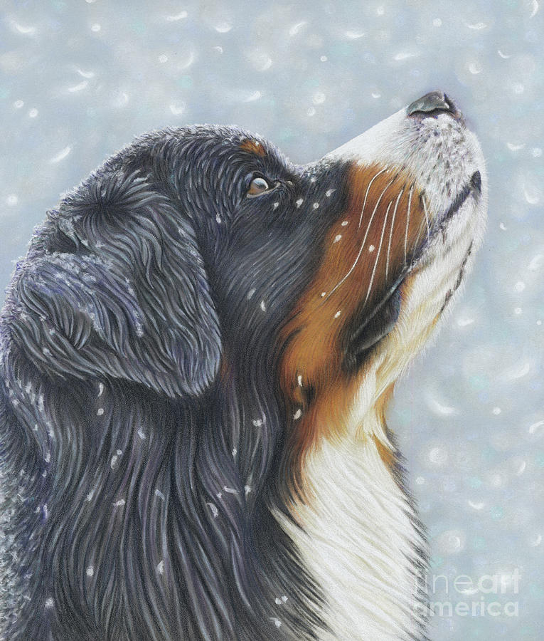 Bernese Painting - Blissful Blue  by Donna Mulley