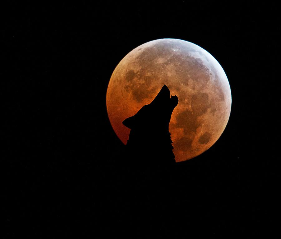 Blood Full Moon And The Wolf Digital Art