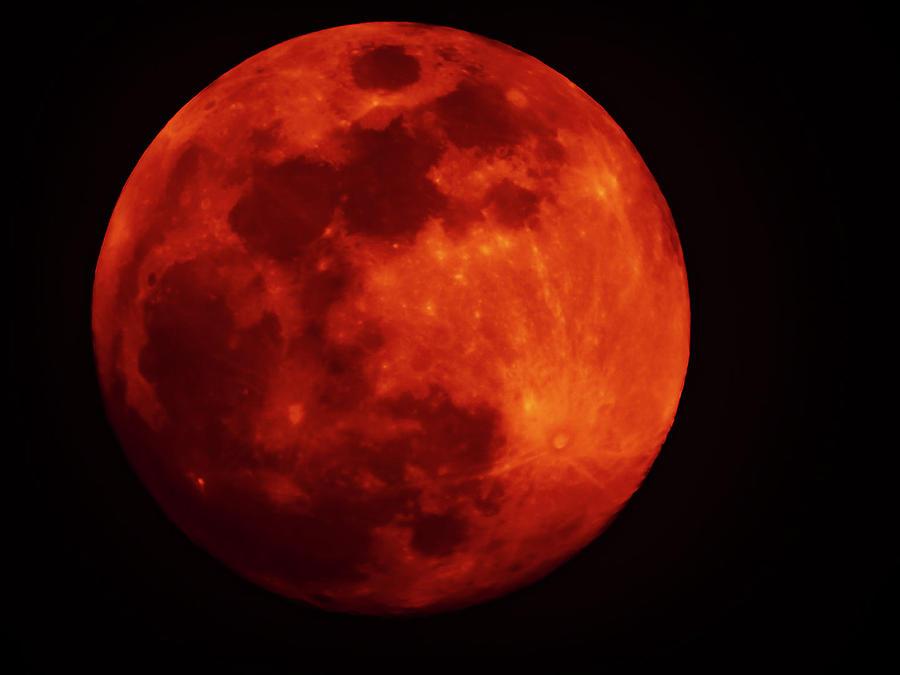 Blood Moon Photograph by Dan Hassett