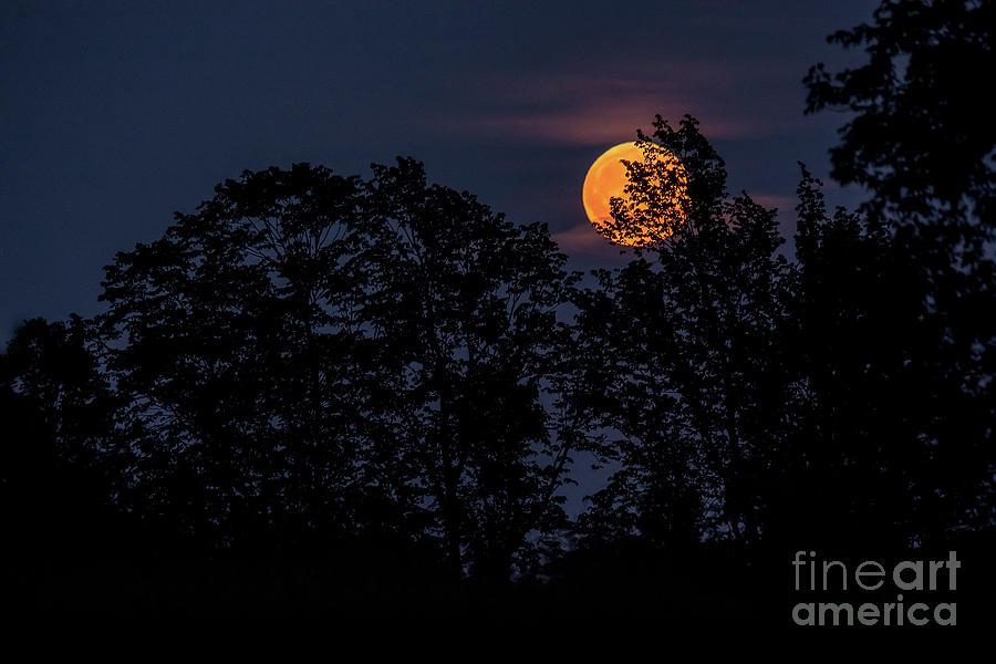 Blood Moonrise by Cheryl Baxter