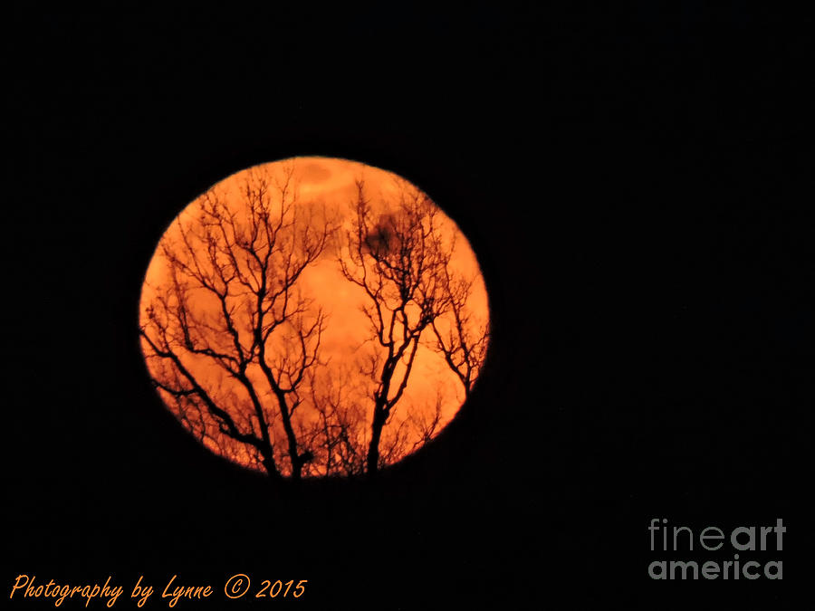 Blood Red Moon Photograph