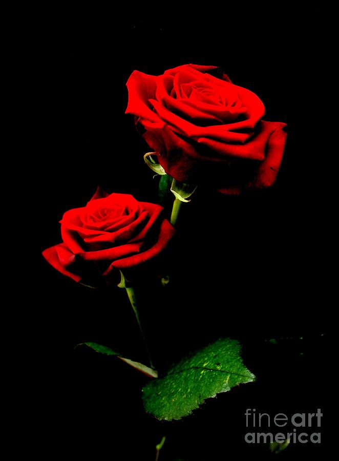 Flowers Photograph - Blood Red Roses by Valia Bradshaw