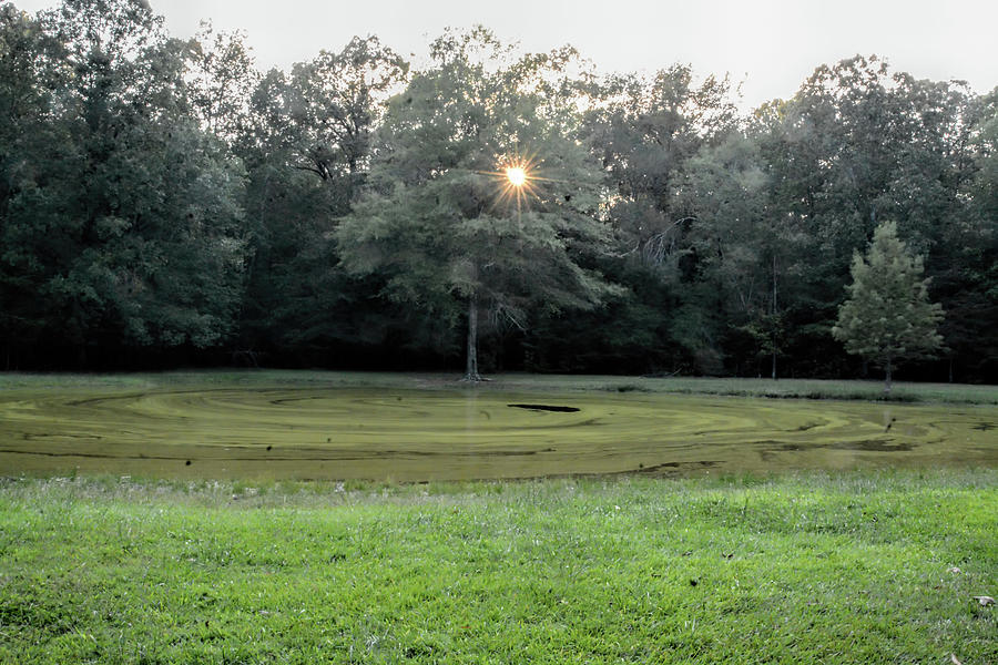 Bloody Pond Photograph - Bloody Pond Shiloh National Military Park Tennessee by WildBird Photographs