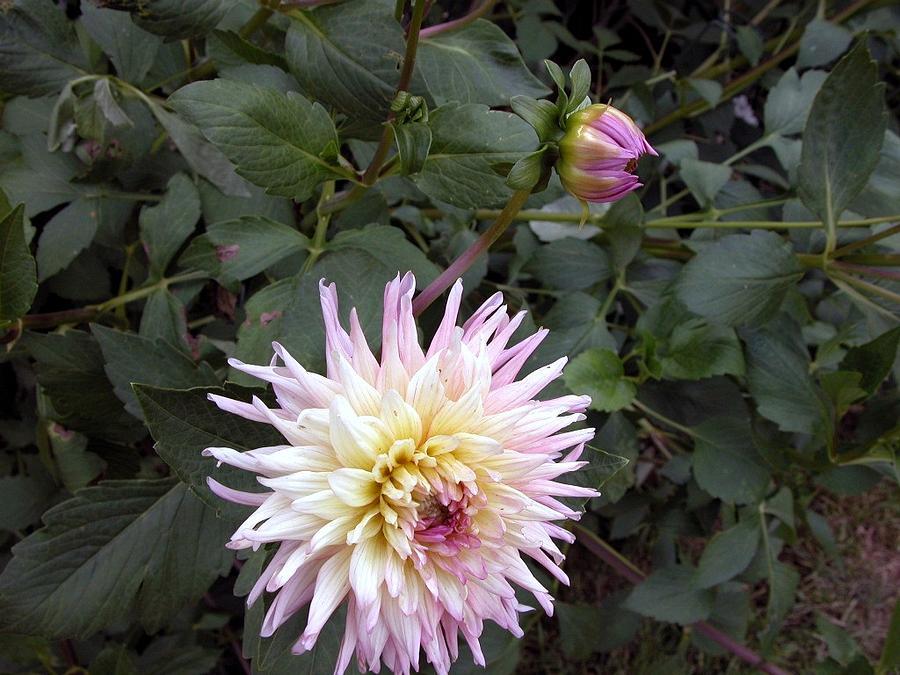 Garden Photograph - Bloom by Michael Morrison